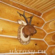 Голова косули деревянная